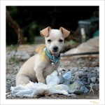Wachhund 'in spe'