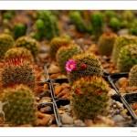 """""""Koalition: die Kunst, den Partner mit einem Kaktus zu streicheln"""" (Carlo Franchi)"""